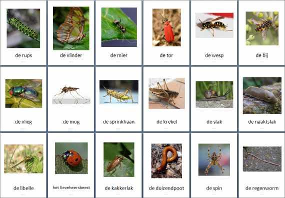 Themakaarten Dieren Kriebelbeestjes Juf Milou