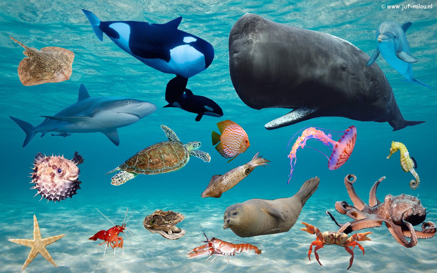 Kringactiviteit Praatplaat Dieren Zeedieren Juf Milou